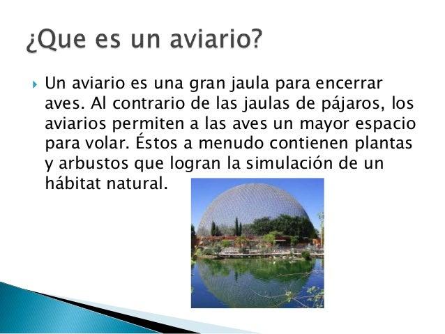 Aviario y diferentes tipos de aves, Yael y Enedina. Slide 2