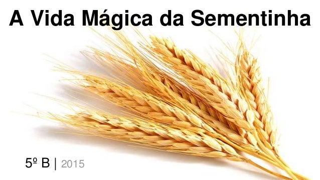 A Vida Mágica da Sementinha 5º B | 2015