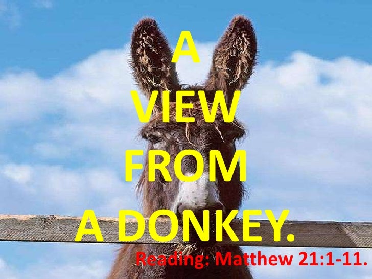 A   VIEW   FROM A DONKEY.21:1-11.    Reading: Matthew