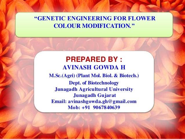 """GENETIC ENGINEERING FOR FLOWER COLOUR MODIFICATION."" PREPARED BY : AVINASH GOWDA H M.Sc.(Agri) (Plant Mol. Biol. & Biotec..."
