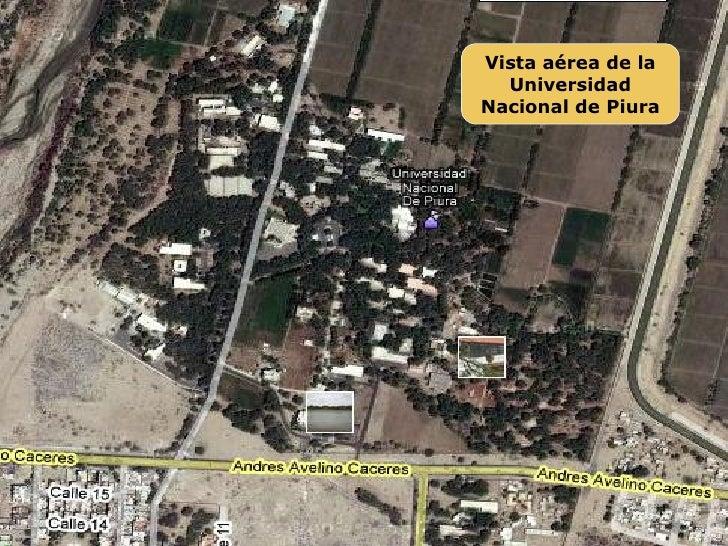 Avistamiento En La Universidad Nacional De Piura Slide 2