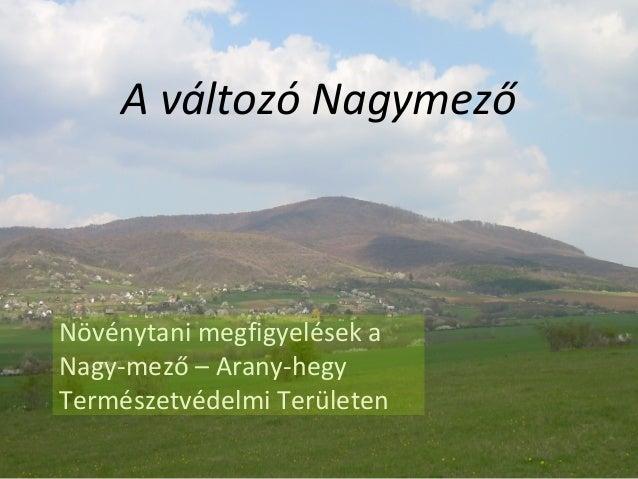 A változó Nagymező Növénytani megfigyelések a Nagy-mező – Arany-hegy Természetvédelmi Területen