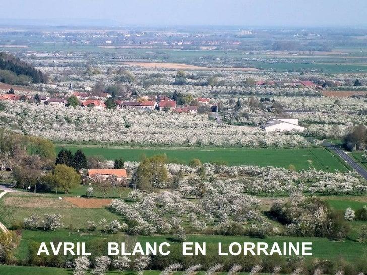 AVRIL BLANC EN LORRAINE