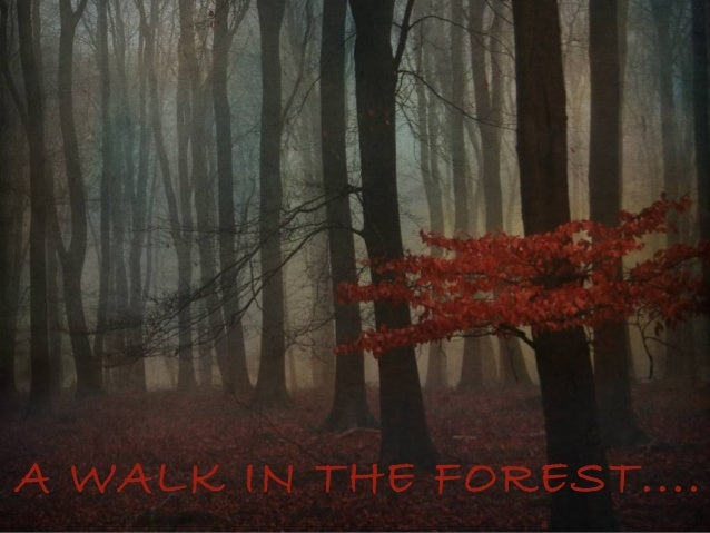 A WALK IN THE FOREST....