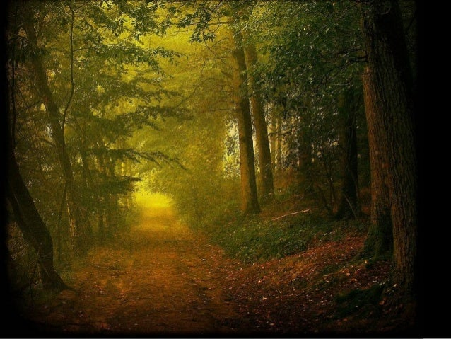 A Walk In The Forest