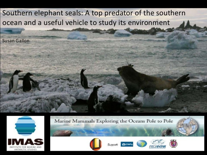 Southern elephant seals: A top predator of the southernocean and a useful vehicle to study its environmentSusan Gallon