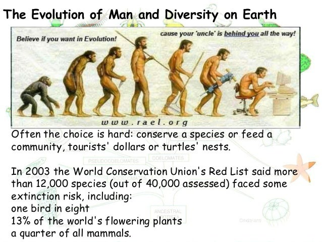 Human evolution mayank ppt |authorstream.