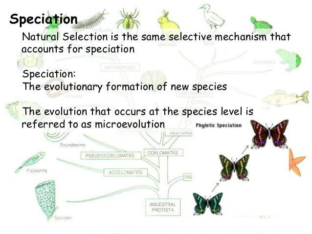 Is Natural Selection A Mechanism Of Speciation