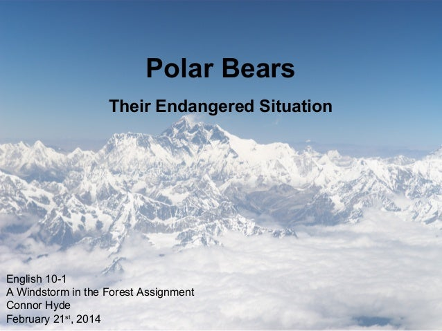 Polar Bears Their Endangered Situation  English 10-1 A Windstorm in the Forest Assignment Connor Hyde February 21st, 2014