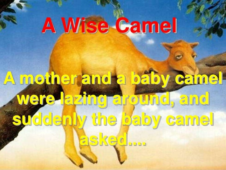 A Wise Camel<br />A mother and a baby camel were lazing around, and suddenly the baby camel asked....<br />