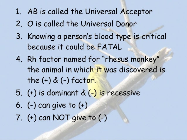 blood group acceptor and donour chart: Blood group donor acceptor chart blood typing ratelco com