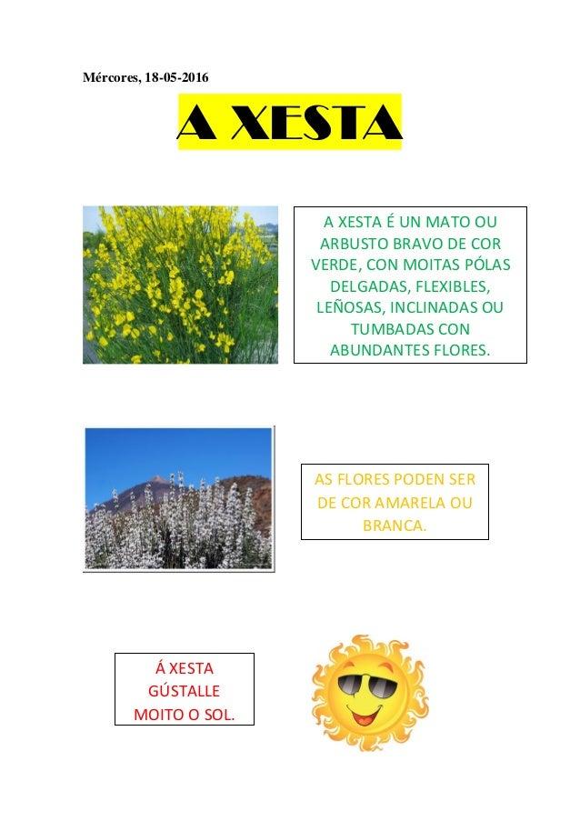 Mércores, 18-05-2016 A XESTA A XESTA É UN MATO OU ARBUSTO BRAVO DE COR VERDE, CON MOITAS PÓLAS DELGADAS, FLEXIBLES, LEÑOSA...