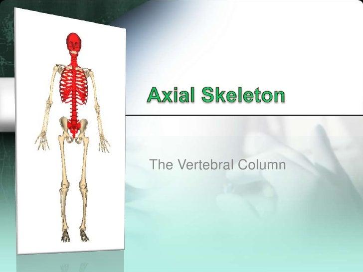Axial Skeleton<br />The Vertebral Column<br />