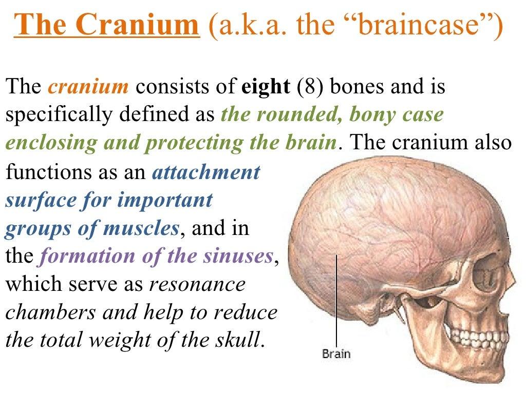 Axial Skeleton Parts 1 2