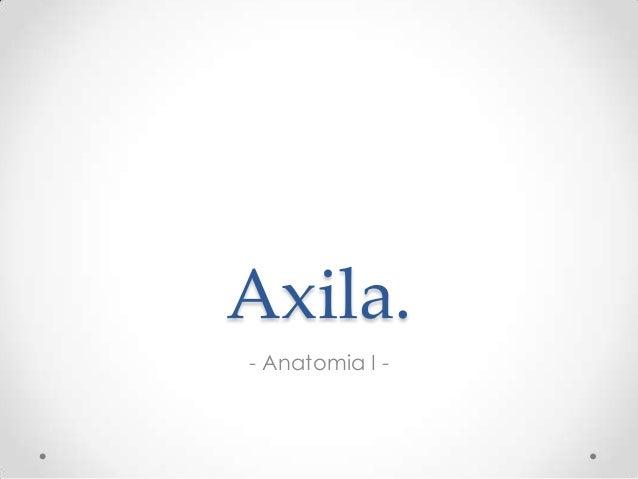 Axila. - Anatomia I -