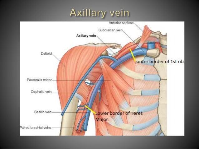 Anatomy Of Axilla