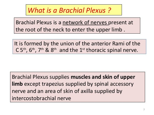 What is a Brachial Plexus ? Brachial Plexus is a network of nerves present at the root of the neck to enter the upper limb...