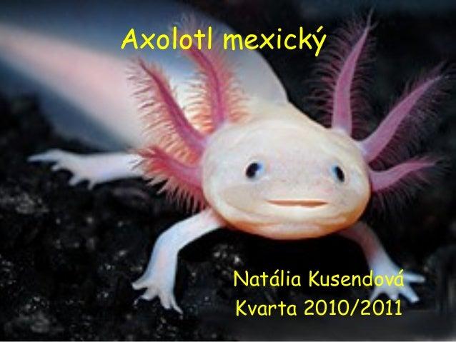 Axolotl mexický Natália Kusendová Kvarta 2010/2011