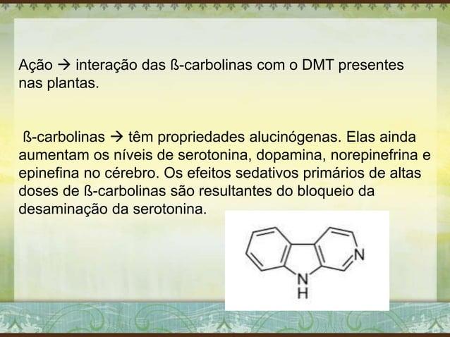 Ação  interação das ß-carbolinas com o DMT presentes nas plantas. ß-carbolinas  têm propriedades alucinógenas. Elas aind...