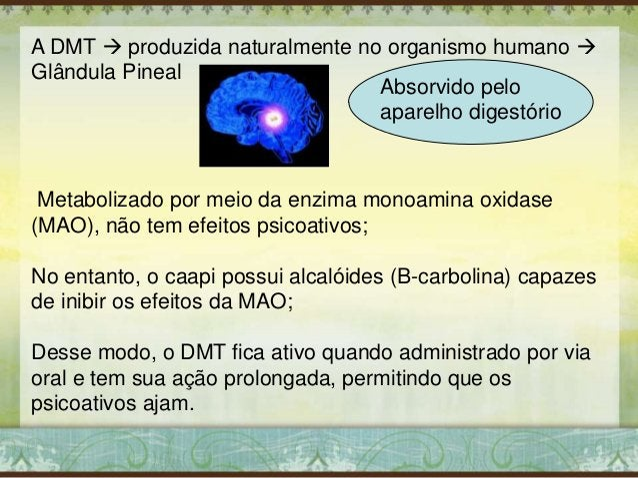 A DMT  produzida naturalmente no organismo humano  Glândula Pineal Metabolizado por meio da enzima monoamina oxidase (MA...