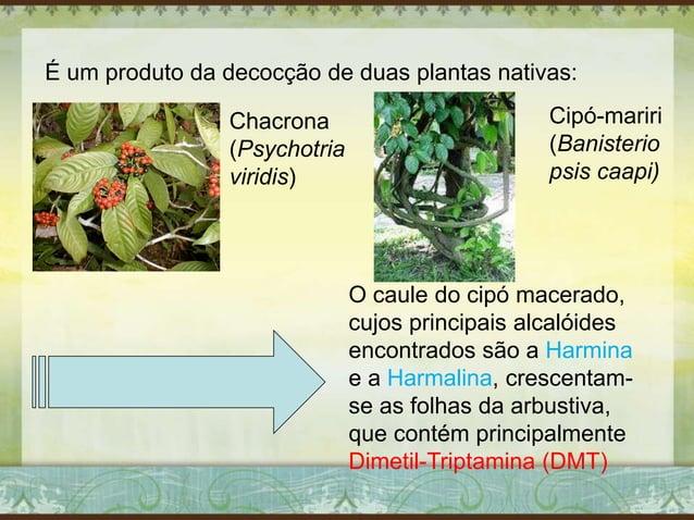 É um produto da decocção de duas plantas nativas: Chacrona (Psychotria viridis) Cipó-mariri (Banisterio psis caapi) O caul...