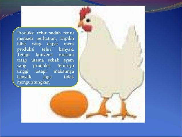 Produksi telur sudah tentu menjadi perhatian. Dipilih bibit yang dapat mem produksi telur banyak. Tetapi konversi ransum t...