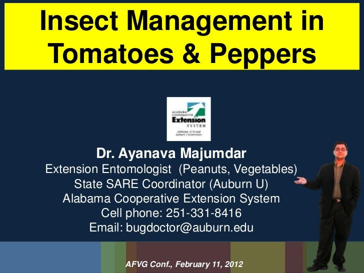 Insect Management in Tomatoes & Peppers        Dr. Ayanava MajumdarExtension Entomologist (Peanuts, Vegetables)     State ...