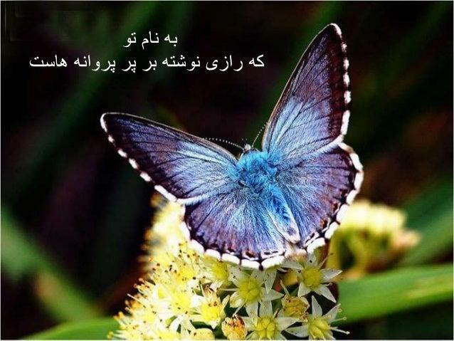 به نام تو  که رازی نوشته بر پر پروانه هاست