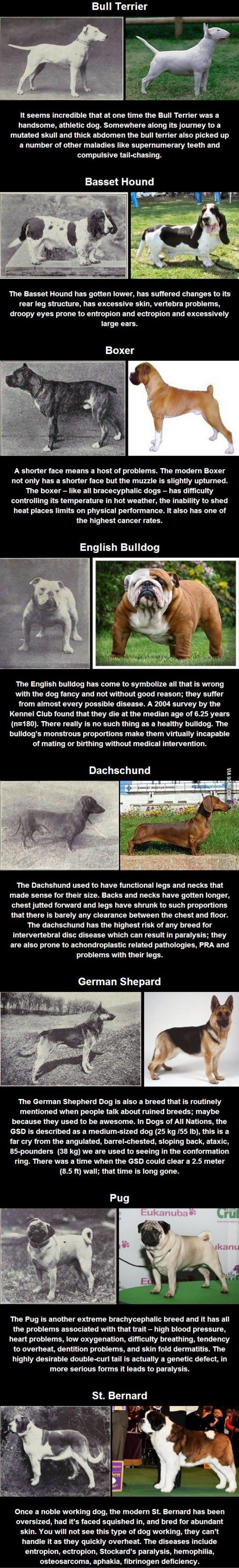 """100 χρόνια εκτροφής και η """"μετάλλαξη"""" των φυλών των σκύλων"""