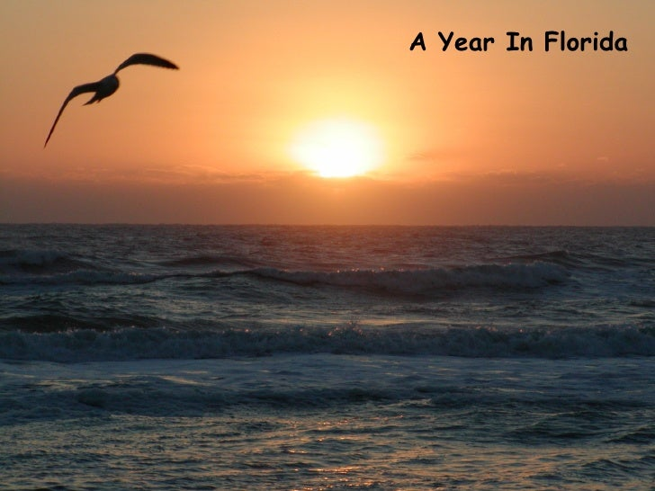 A Year In Florida