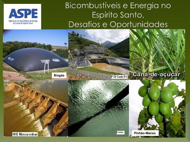 Bicombustíveis e Energia no Espírito Santo,Desafios e Oportunidades<br />Biogás<br />Pinhão-Manso<br />