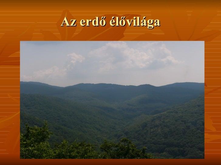 Az erdő élővilága