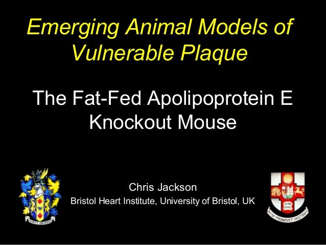 The Fat-Fed Apolipoprotein E Knockout Mouse Chris Jackson Bristol Heart Institute, University of Bristol, UK Emerging Anim...