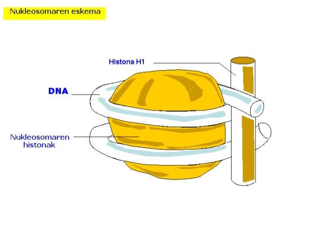 quell und lösereaktionen an polyesterfasern zur untersuchung von deren veränderungen und schädigungen