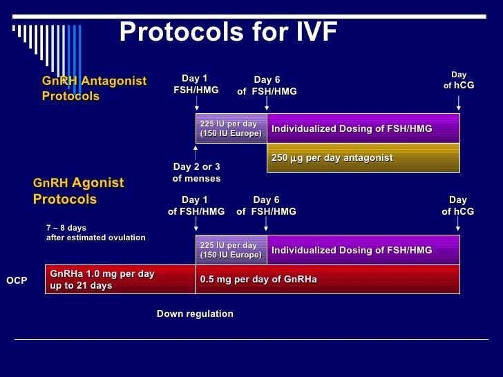 lang protokol ivf