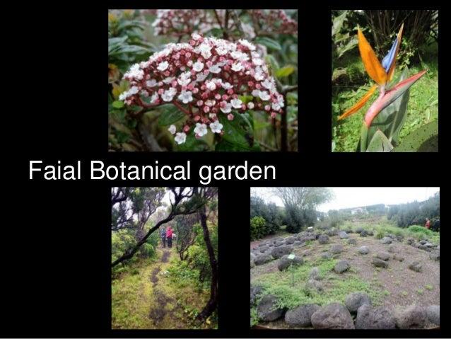 Faial Botanical garden