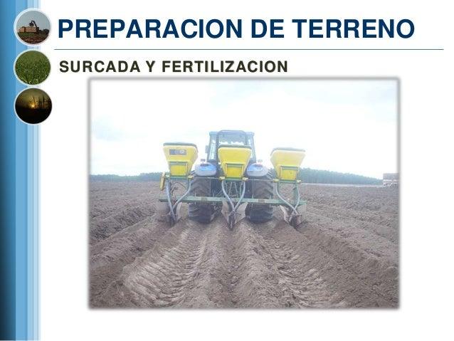PREPARACION DE TERRENOSURCADA Y FERTILIZACION