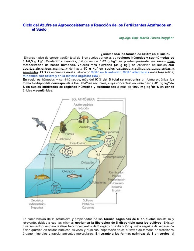 Ciclo del Azufre en Agroecosistemas y Reacción de los Fertilizantes Azufrados en el Suelo Ing.Agr. Esp. Martín Torres Dugg...