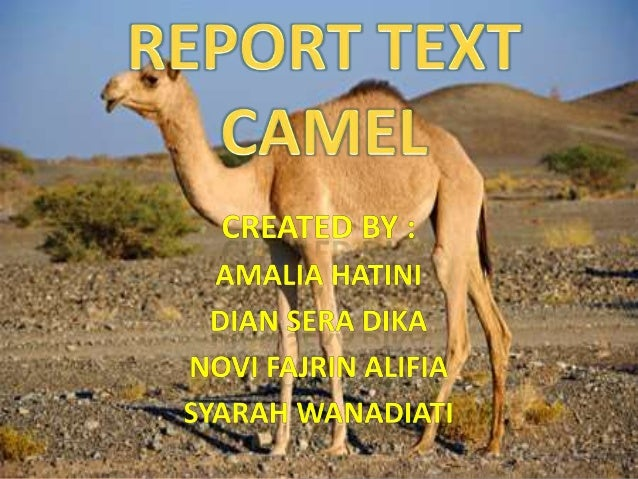 The Dromedary Camels are from Africa and Saudi Arabia.