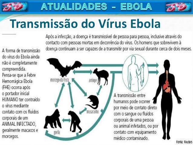 Aula vrus ebola ebola patognese reheart Images