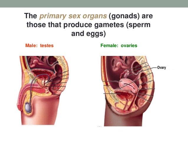 Human Female Sex 88