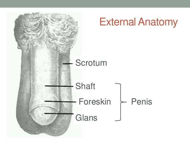 Blowjob very small penis