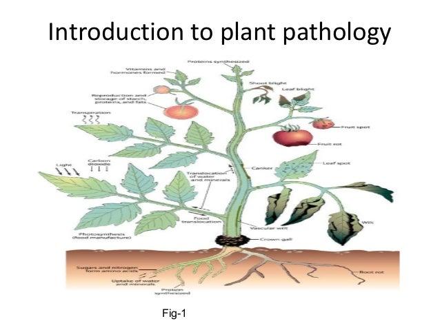 scope of plant pathology