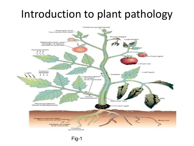 Plant Pathology Ph.D. (Ithaca) - Cornell Grad School
