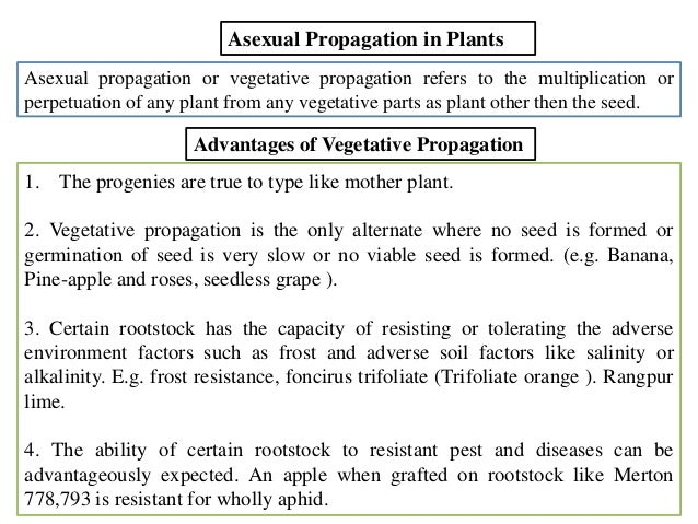 Asexual plant propagation examples of resumes