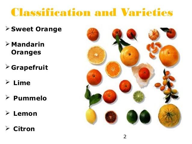 B.sc. agri i po h unit 4.2 cultivation practices of citrus | 638 x 479 jpeg 67kB