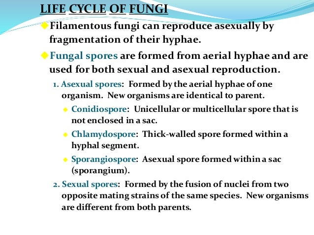 Asexual reproduction of filamentous fungi