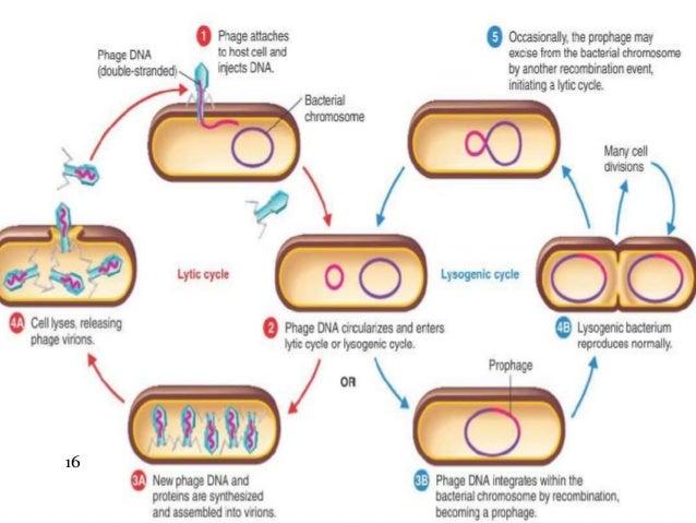 B.sc.(micro) i em unit 3.5 viruses