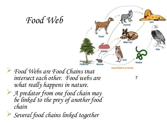 organisms of a food chain in the desert In the activity, we will construct food chains and food webs with species endemic to the sonoran desert organisms, regardless of whether they are plants or animals, cannot live within a particular ecological community unless they have food resources available to them.