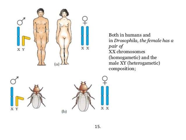 Hog tied anal penetration split